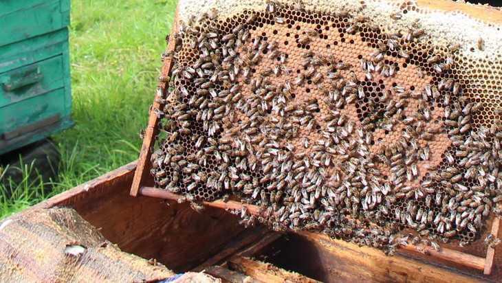Названа причина отравления пчел в Брянской области
