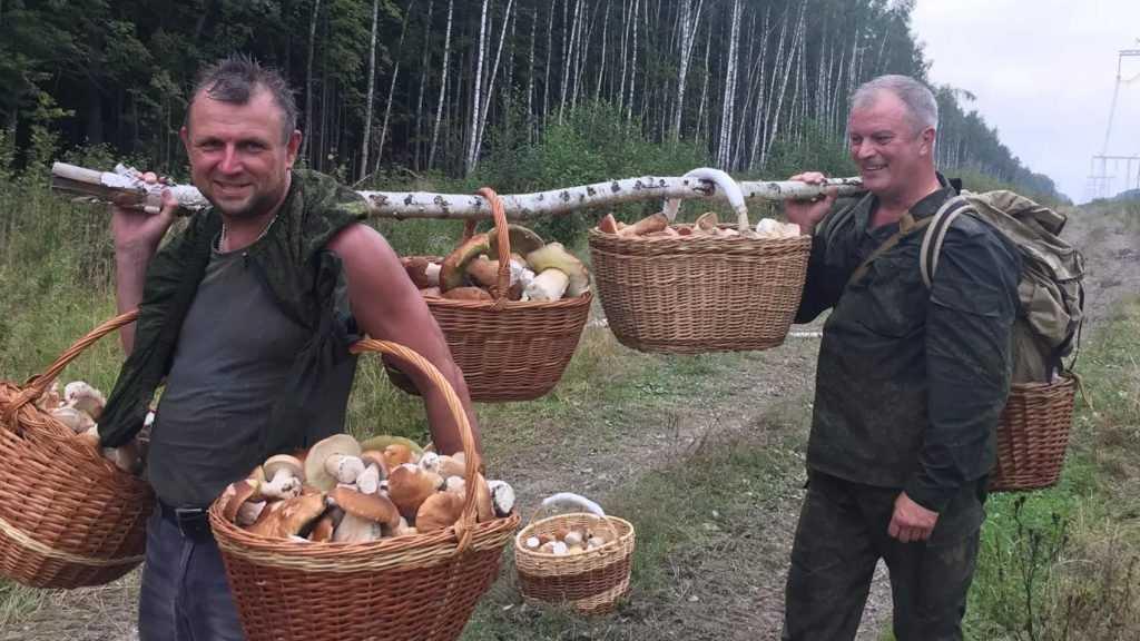 Поляки: россияне пойдут за грибами в лес и захватят нас