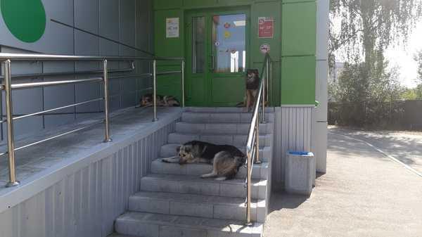 В Брянске стая собак захватила магазин «Пятерочка»