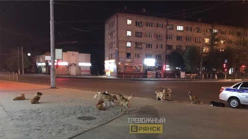 Бродячие собаки захватили в Брянске площадь перед Бежицким рынком