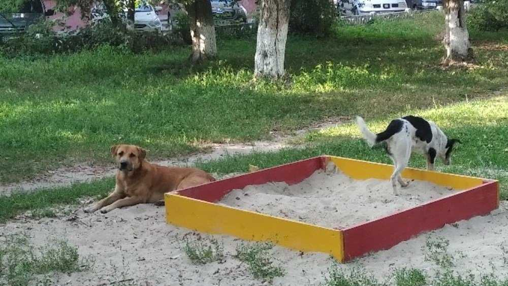 В Брянске бродячие собаки превратили в туалет детские песочницы