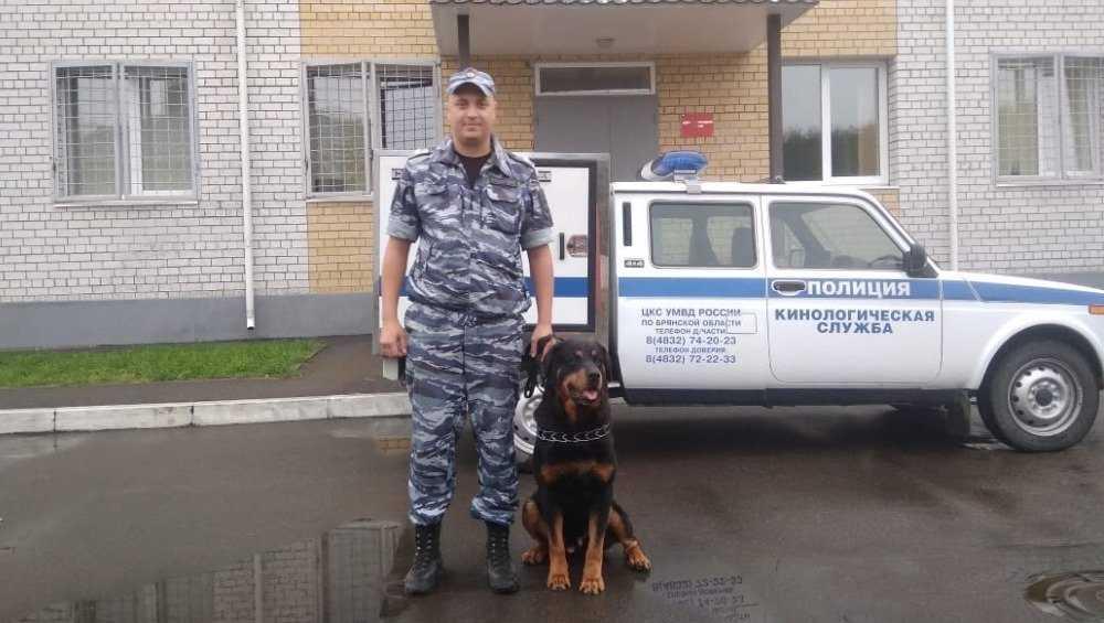 В Брянске пёс Тайсон помог полиции раскрыть кражу инструментов из гаража