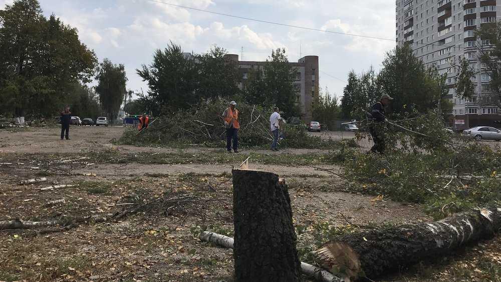 Вырубают деревья для строительства развязки
