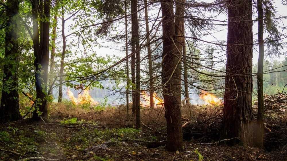Бездействие красногорских чиновников привело к крупному лесному пожару