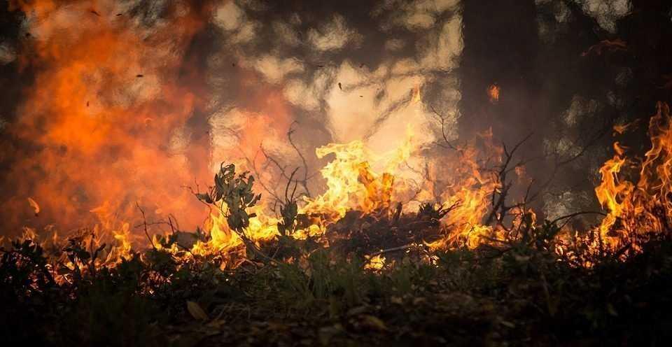 Жители Брянской области отравили себя радиоактивным пеплом