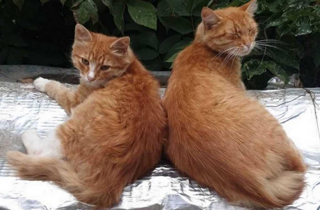 Брянские коты почуяли осень