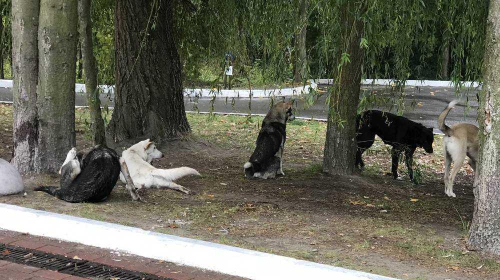 Собаки стали главной достопримечательностью лучшего парка Брянска