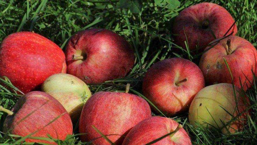 Почему рекордный урожай центральных регионов России гниет на участках