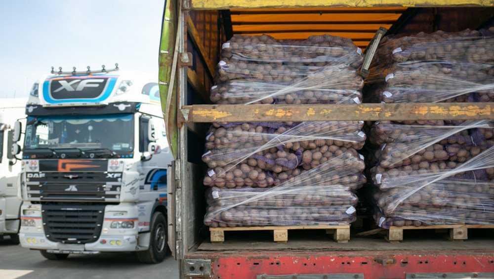 Экспорт брянского картофеля резко вырос в этом году