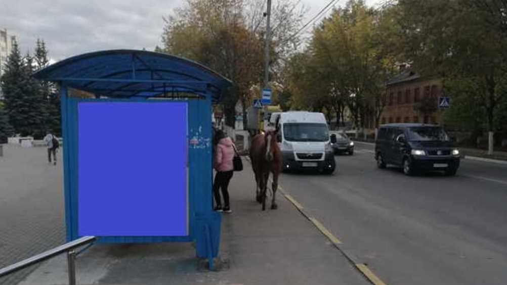 В Брянске на остановке сфотографировали ожидавшую маршрутку лошадь