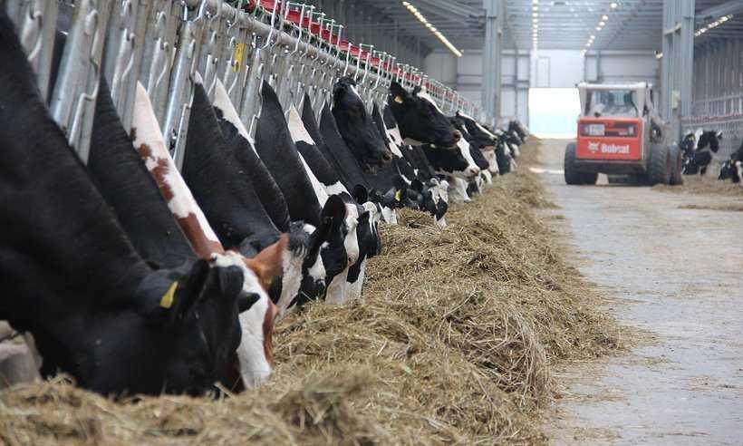 Брянских быков и коров купил Узбекистан