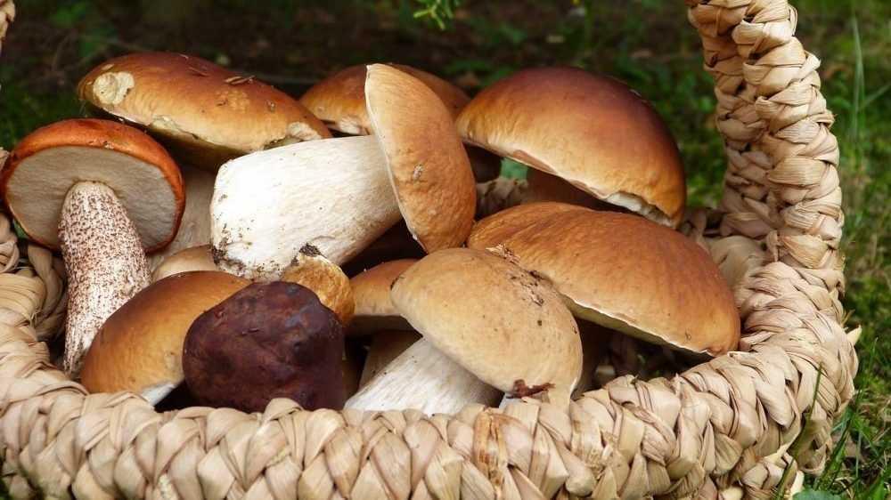 Роспотребнадзор дал советы, как собирать и готовить грибы