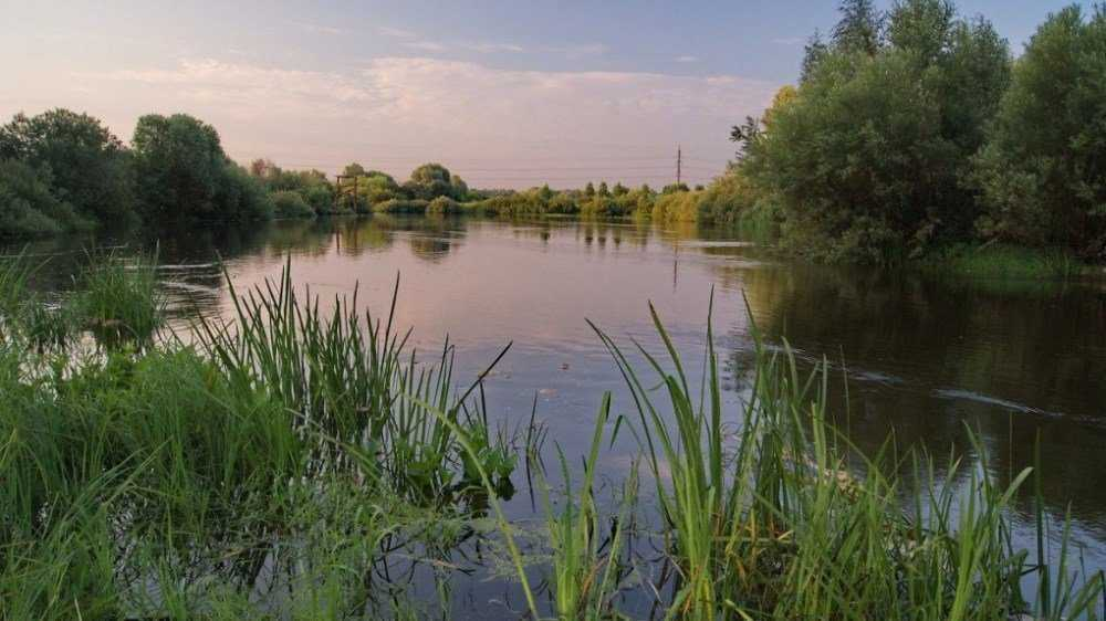 В Брянске возле озера Орлик обнаружили тело мужчины