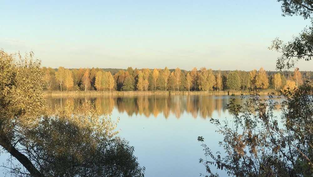 В Брянской области 16 сентября похолодает до 8 градусов