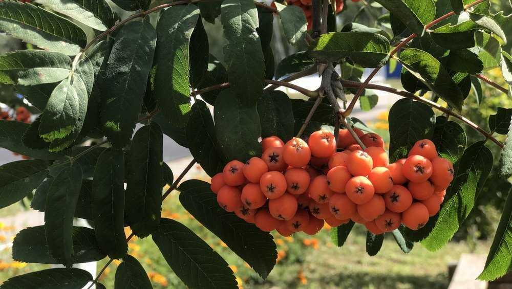 В Брянской области ноябрь будет теплее обычного