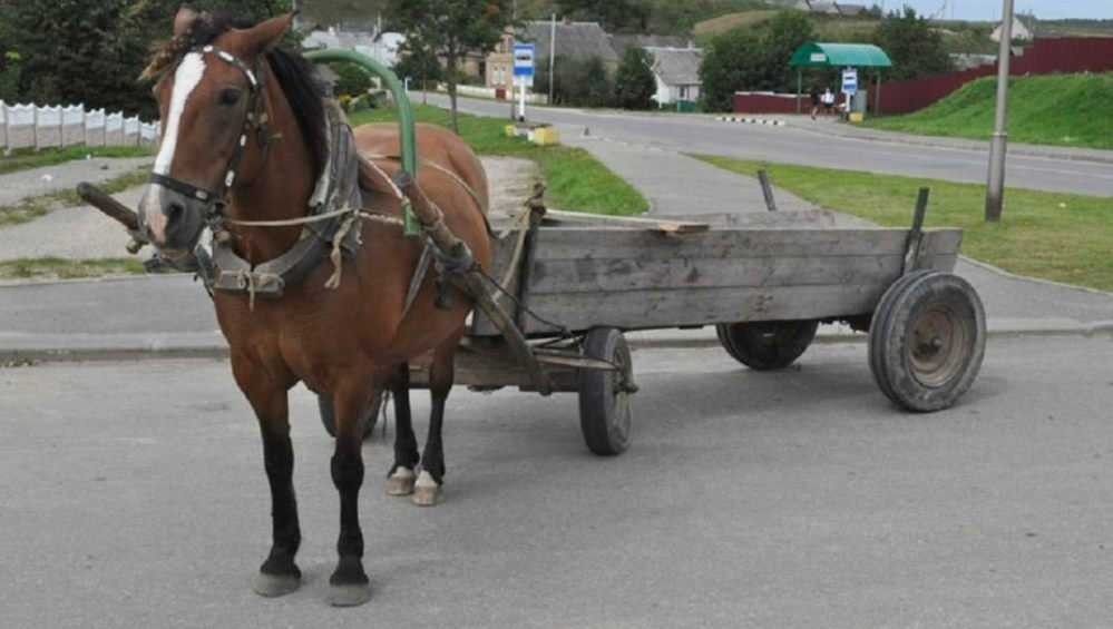 Под Суражом парень на ВАЗ протаранил телегу и Hyundai