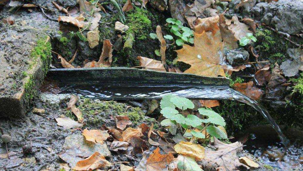 В Брянской области начали обустраивать лесные родники
