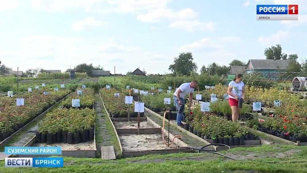 Переселенцы из Молдавии вырастили в Брянске более 100 видов роз