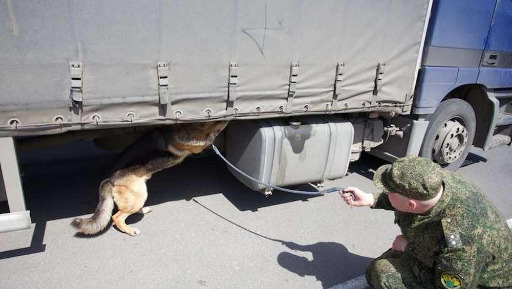 Сербский дальнобойщик не ускользнул от брянской пограничной собаки