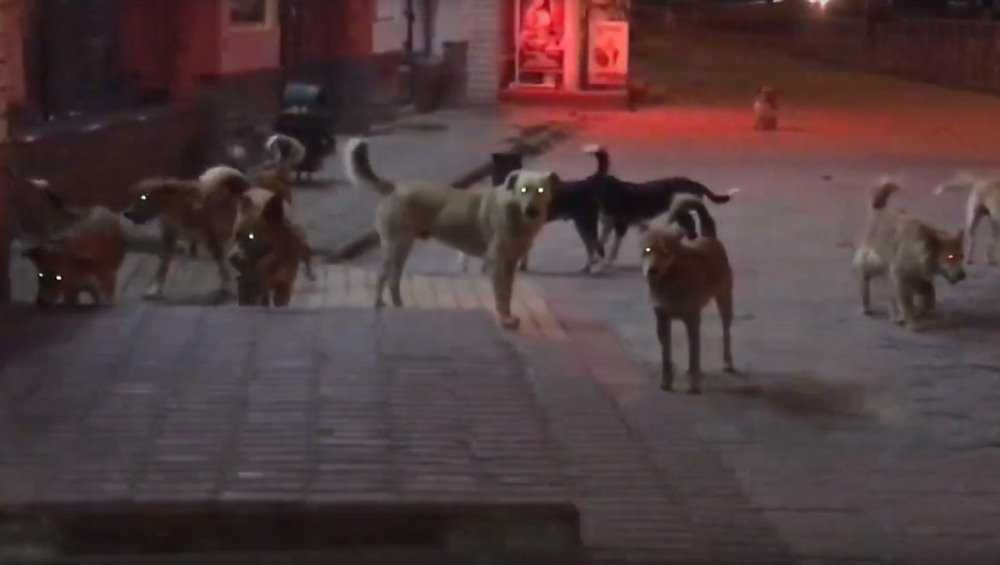 В центре Брянска свора собак ночью напала на велосипедиста