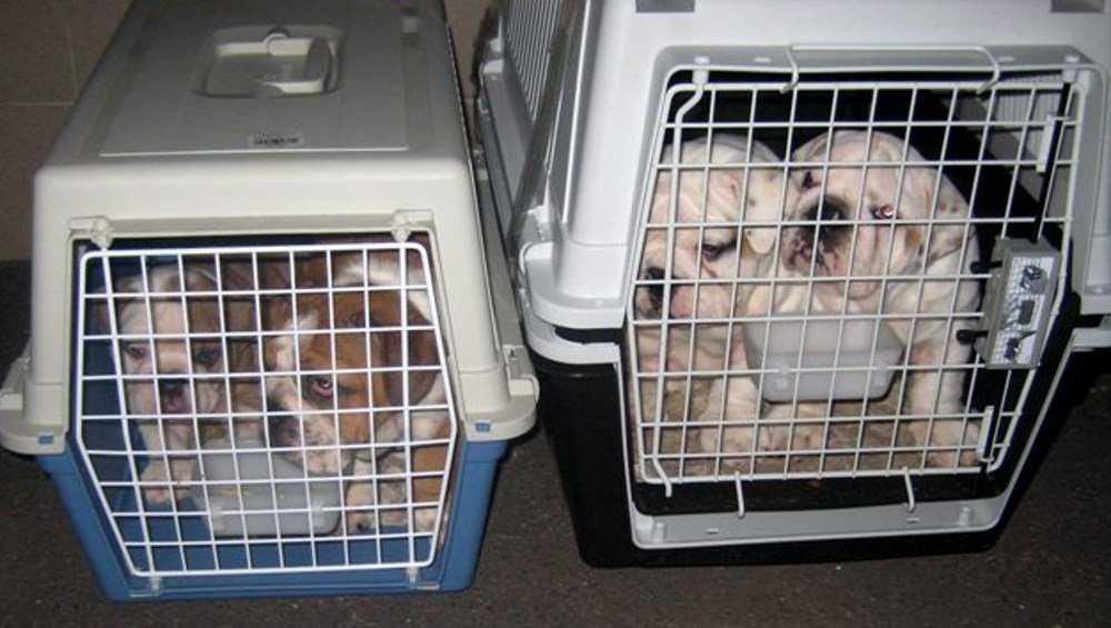 Брянские таможенники обнаружили в молдавском поезде 16 щенков
