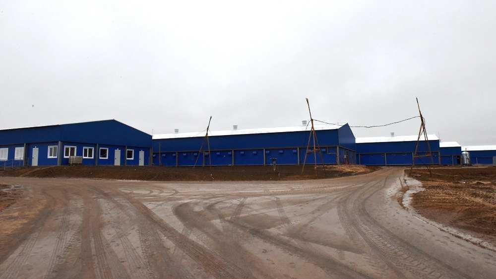 В Брянской области крупный свинокомплекс откроют весной 2020 года