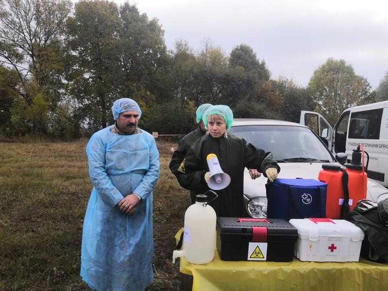 В Унечском районе выявили африканскую чуму свиней