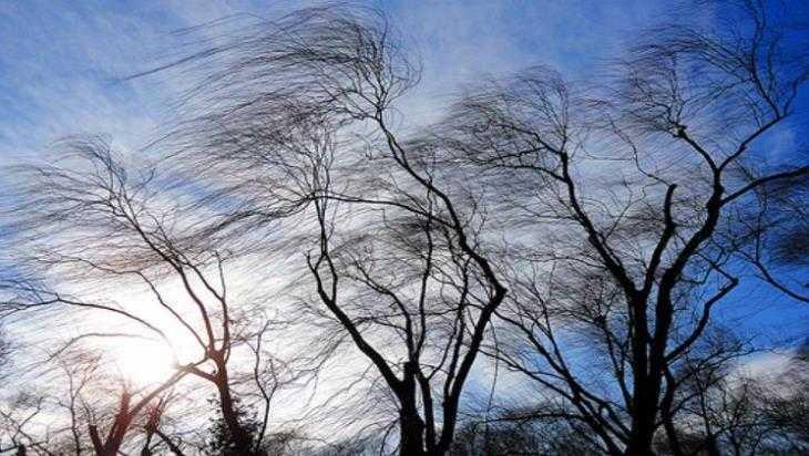 В Брянской области объявили предупреждение из-за ураганного ветра