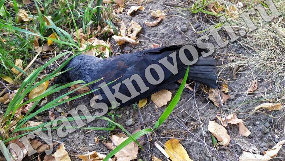В Новозыбкове произошла массовая гибель птиц
