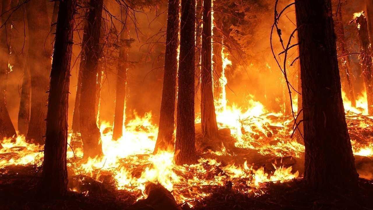 В Брянском районе сгорел участок леса