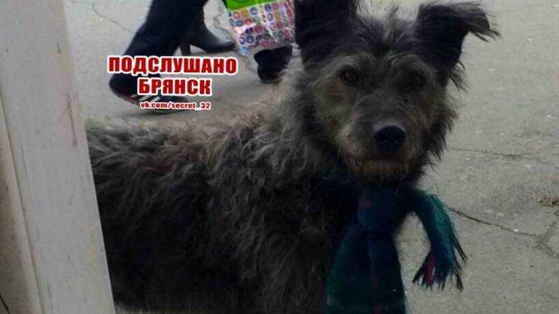 В Брянске сфотографировали забавного пса с шарфом на шее