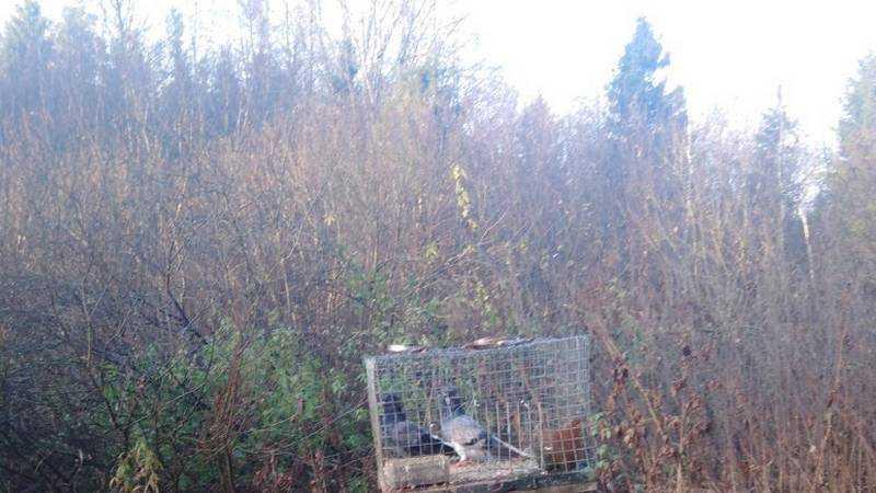 Под Брянском в лесу нашли убитых ястребов