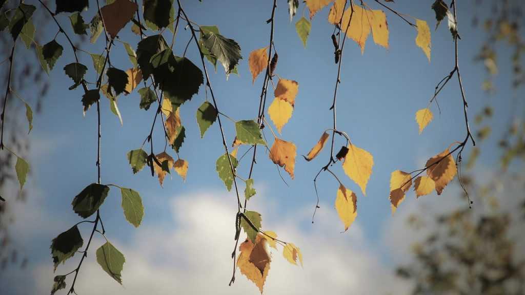 Брянцам 23 октября пообещали дождь и 22-градусное тепло