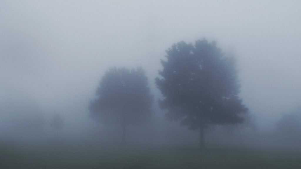 Брянск с утра накрыло туманом