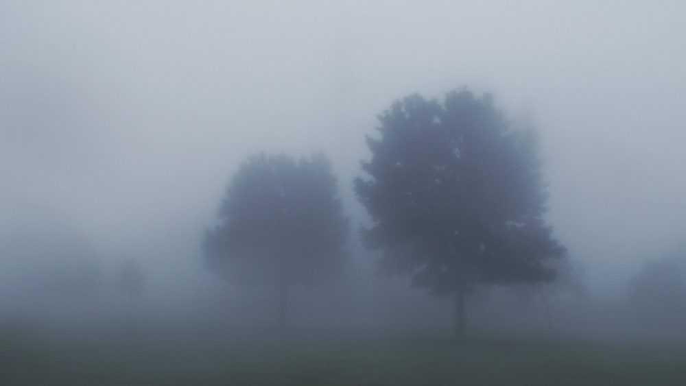 Брянцам 19 ноября пообещали туман и заморозки