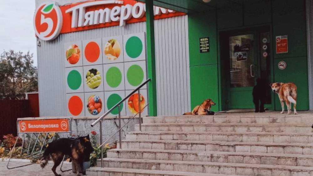 В Трубчевске собаки забаррикадировали вход в магазин «Пятёрочка»