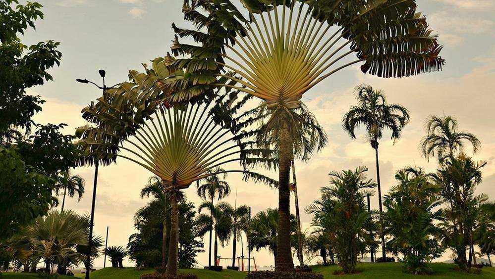 Брянская путешественница рассказала об удивительном случае в Гайане