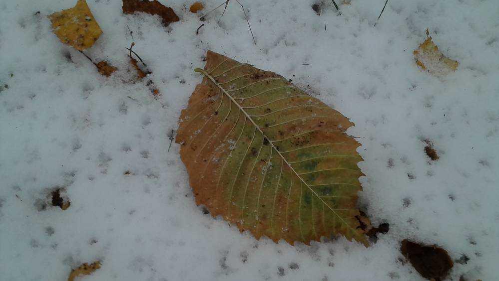 Брянцам в пятницу обещают мокрый снег