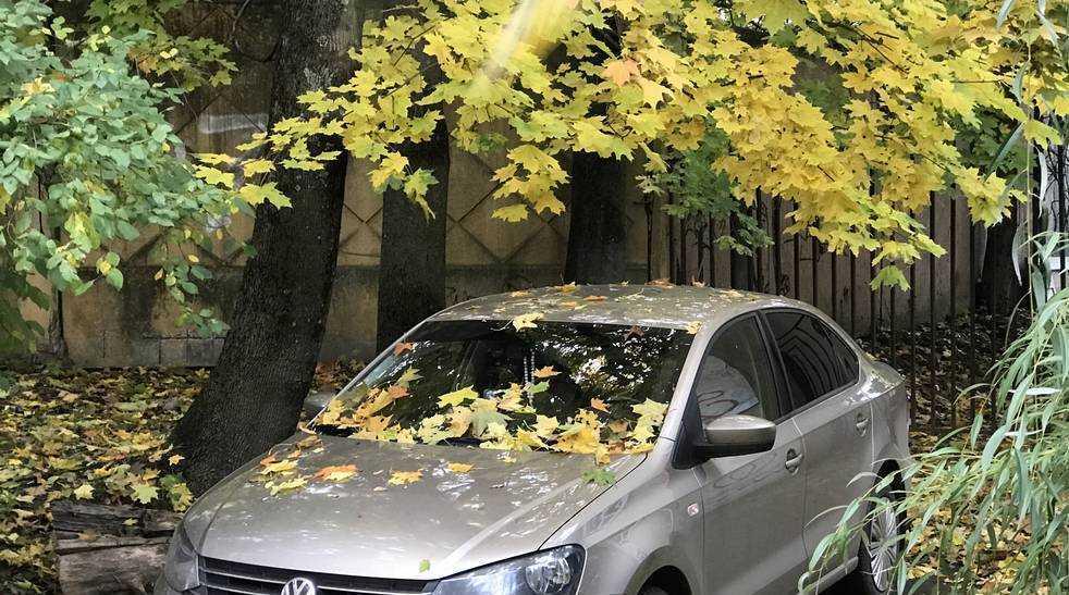 На Брянщине в первый день ноября пройдут дожди и похолодает до 3 градусов