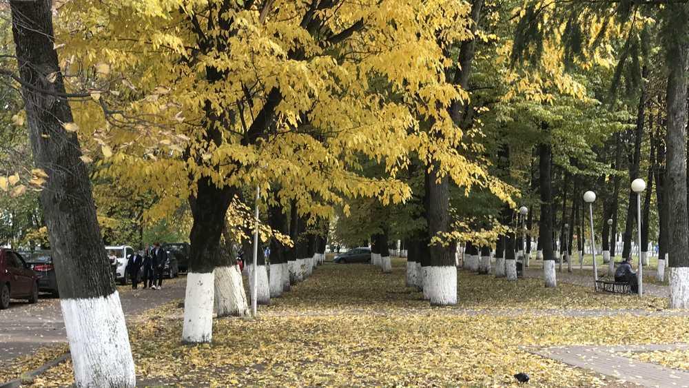 В Брянскую область 2 октября придёт 21-градусное тепло