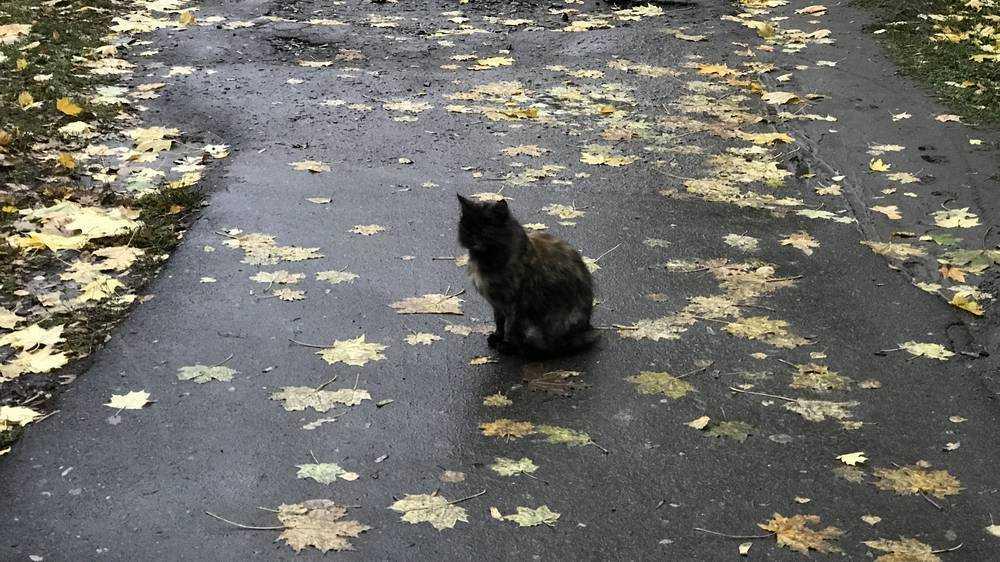 Жители Брянска попросили чиновников очистить дорожки от опасной листвы