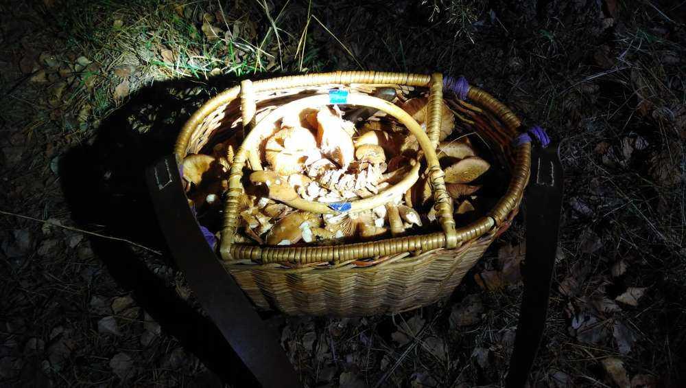 Под Выгоничами нашли лишь корзину потерявшейся в лесу пенсионерки