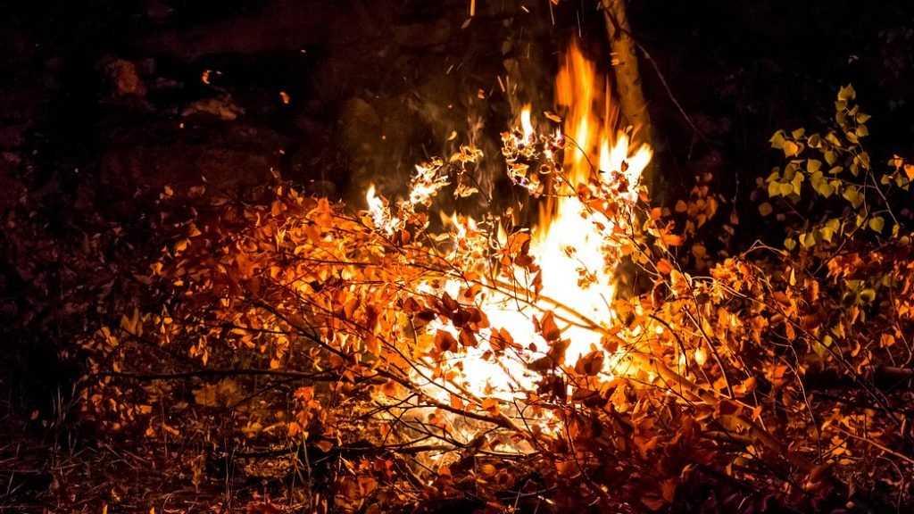 В Клетнянском районе спасатели сразились с лесным пожаром