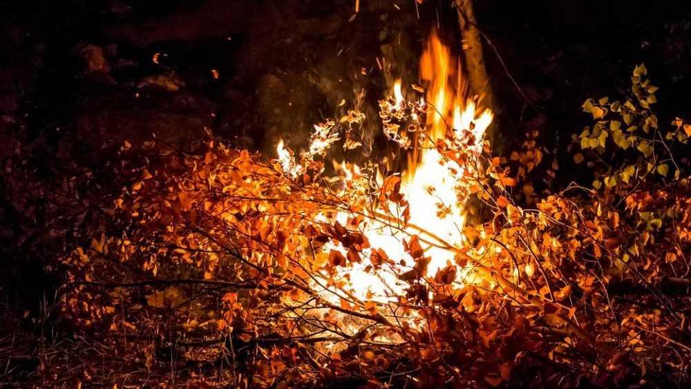Брянские спасатели за сутки потушили девять лесных пожаров