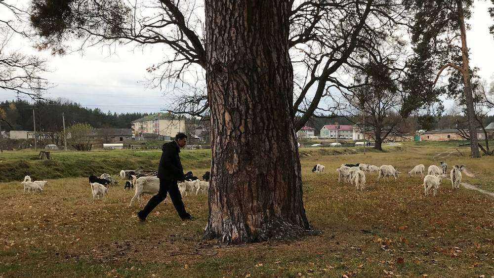 Пастухи рассказали о хозяйстве и козах монастыря под Брянском