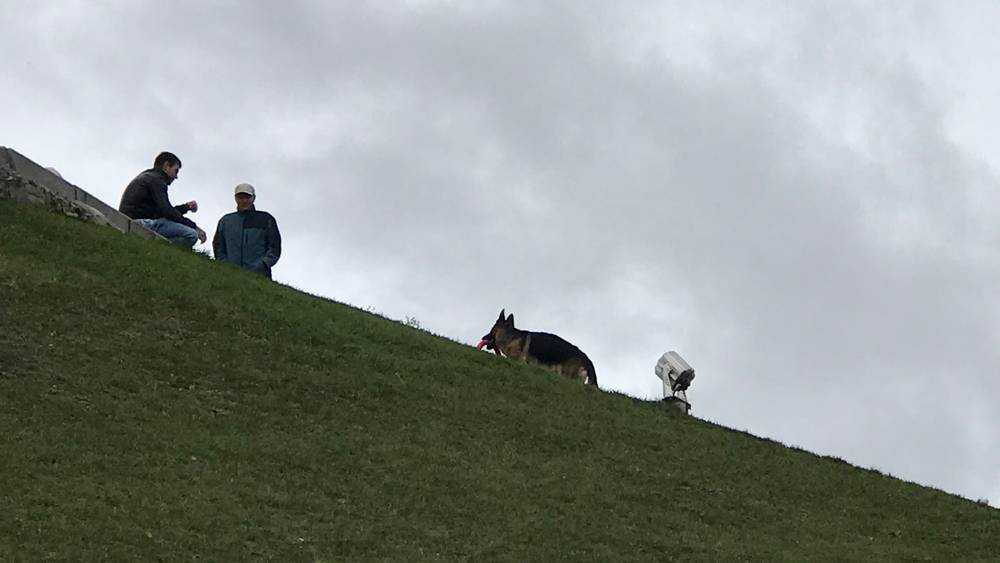 В Брянске на Кургане Бессмертия устроили собачьи развлечения