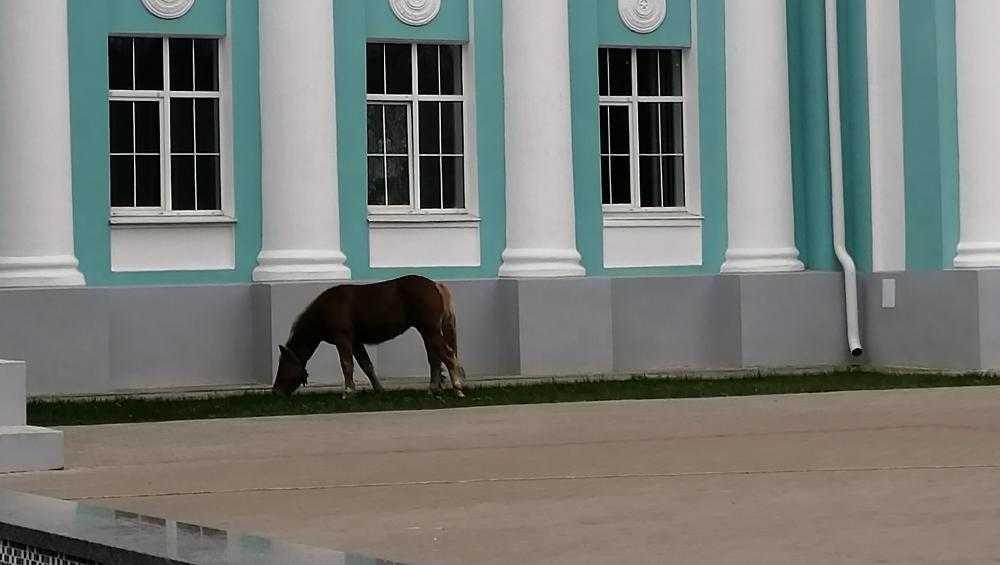 Брянцев возмутили пасущиеся на газонах лошади
