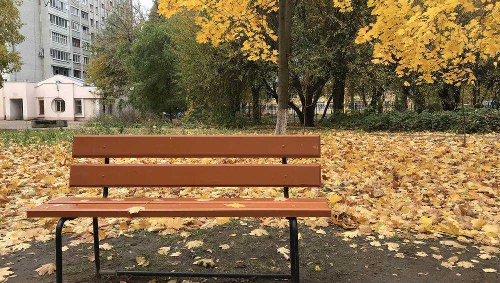 На Брянщине последний день октября будет прохладным и дождливым