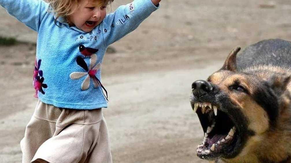 В Новозыбкове оштрафовали хозяина напавшей на ребёнка собаки