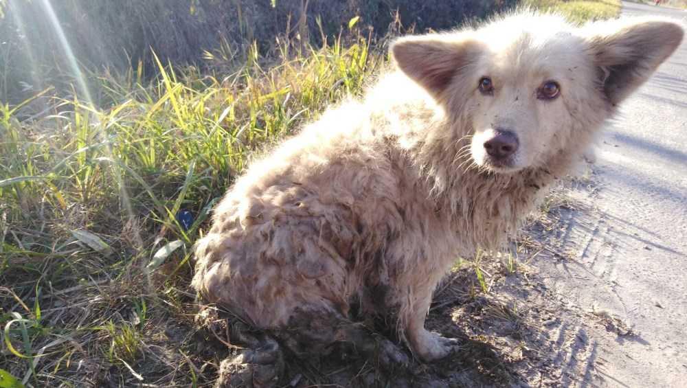О массовом убийстве бездомных собак сообщили в Брянске